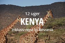 Kombiner højskole med at rejse på vores lange højskoleophold til Kenya